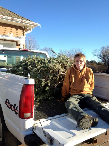tree in the truck