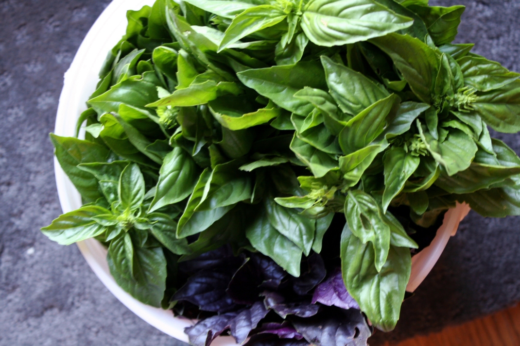 Bucket of Basil